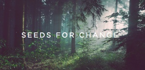 rain seeds for change foundation Covington