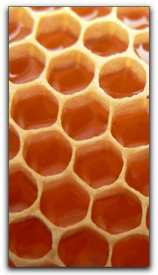 Honey Natural Remedy For Kids Coughs In Wayland
