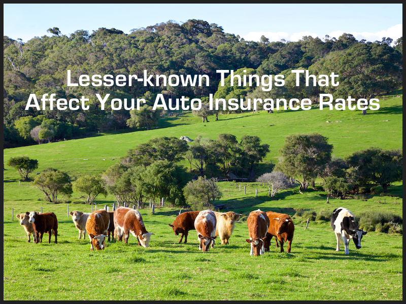 Lesser-known Things That Affect How Much You Pay For Insurance
