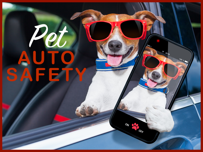 Pet Auto Safety